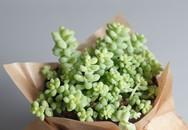 10 loài cây mọng nước xinh xắn vô cùng, bạn cần sắm ngay để trang trí nhà