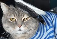 Chân dung 'Sĩ quan mèo' đầy uy lực trên chiếm hạm Nga