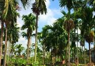 Ngôi làng ở Hải Phòng trồng loại quả bán sang Trung Quốc thu 1.000 tỷ