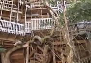 Nhà cây lớn nhất thế giới thành tro vì hỏa hoạn