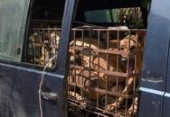 Bệnh dại và trầm cảm từ nghề buôn thịt chó
