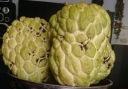 Na 'khổng lồ' mỗi trái một kg ở miền Tây