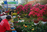 Những loại hoa Tết người Sài Gòn thường mua để mang lại tài lộc, may mắn cả năm