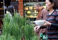 Khóm lúa xuân thì giá bằng 1kg thịt lợn đắt khách ở chợ hoa Hàng Lược