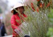 """Đây là loài hoa khiến chị em """"điên đảo"""" mua sắm dịp Tết cổ truyền"""