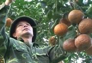 Cam sành Hàm Yên trúng vụ, nông dân hối hả cắt cam phục vụ Tết
