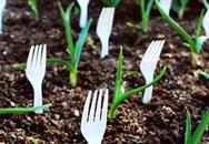 """Cắm dĩa nhựa vào đầy vườn nhìn qua ai cũng nghĩ là """"ngớ ngẩn"""" nhưng nếu biết lý do bạn sẽ phải tâm phục khẩu phục"""