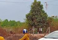 Người dân hốt hoảng bỏ chạy khi phát hiện bộ xương người chết khô ở bãi đất trống