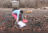 Ba chàng ngốc – Nụ cười châm biếm về vấn đề ô nhiễm môi trường