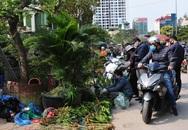 Độc đáo phiên chợ hoa, cây cảnh năm ngày họp một lần tại Hà Nội