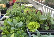 Mong con được ăn rau sạch hàng ngày, bà mẹ Đà Nẵng trồng cả sân thượng xanh um nhờ kinh nghiệm đơn giản