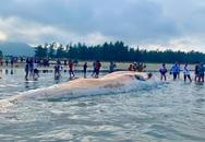 """Cận cảnh cá voi """"khủng"""" trôi dạt vào bờ biển Hà Tĩnh"""