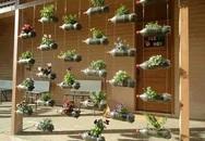 Tận dụng vỏ chai nước ngọt làm thành khu vườn khiến ai cũng mê mẩn