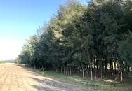 Đa Lộc, Hậu Lộc, Thanh Hóa: Nỗi lo rừng chắn sóng ven biển biến mất