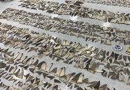 Hơn nửa tấn vây cá mập khô trị giá 1 triệu USD bị bắt giữ ở Miami
