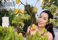 Cây trồng bằng chậu nhưng vẫn cho quả sai lúc lỉu trong biệt thự nhà Trịnh Kim Chi