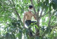 """Nam thanh niên trèo cây bỏ trốn khi công an ập vào """"động lắc"""""""