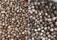 Sò gạo giá rẻ sập sàn chỉ 17.000 đồng/kg được bán đầy trên chợ mạng