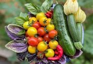 Cô gái trẻ xinh đẹp trở về nông thôn, tự tay trồng cả vườn rau quả sạch