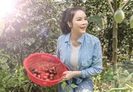 Về quê tránh dịch, Lý Nhã Kỳ đẩy xe rùa đi thu hoạch hoa quả trong nông trại 50 hecta