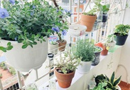 """Nghỉ ở nhà dài ngày, chàng trai Sài Gòn biến ban công 4m² nhàm chán thành """"khu vườn"""" xanh mướt đủ loại cây"""