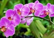Loại hoa đẹp bày trong phòng khách giúp hút tài lộc