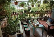 """Chàng trai Hà Nội chia sẻ bí quyết trồng cả """"rừng cây"""" tươi tốt xanh mát trong nhà"""