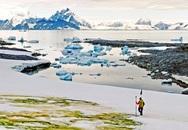 Kỳ lạ tuyết ở Nam Cực chuyển màu xanh lá và ai biết lý do cũng bất ngờ