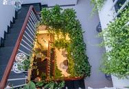 Giữa Sài Gòn náo nhiệt, vẫn có căn nhà ống cực chill và không gian xanh mát với chi phí 20 triệu đồng mua cây xanh