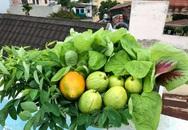 """Chỉ với 2 năm kinh nghiệm làm vườn, mẹ đảm ở Đồng Nai đã biến sân thượng 50m² thành """"trang trại"""" thu nhỏ"""