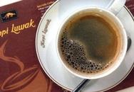 Sự thật rùng mình đằng sau loại cà phê mà nhiều người thích uống