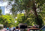 Cây xanh trong KĐT Nam Trung Yên - Hà Nội tốt um, nhiều cành gãy đổ uy hiếp đến người dân