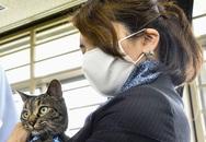 Chú mèo cứu người được Nhật vinh danh