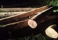 Hà Tĩnh: Tập kết số lượng lớn gỗ lậu thì bị bắt ngay bìa rừng