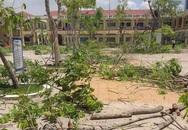 Từ vụ học sinh bị cây phượng đè tử vong: Bất cập về công tác quản lý cây xanh trong nhà trường?!