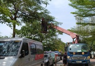 Sau phản ánh, đơn vị chức năng tiến hành cắt tỉa cây xanh tại KĐT Nam Trung Yên - Hà Nội