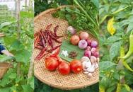 Khu vườn ngoại ô của người phụ nữ xinh đẹp rời phố vì thích trồng các loại cây gia vị