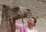 Chú lạc đà vượt 100 km tìm về chủ cũ