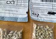 50 bang của Mỹ đồng loạt cảnh báo hạt giống bí ẩn từ Trung Quốc