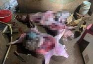 Kinh hoàng: Bắt quả tang vụ mổ thịt nhiều con heo chết từ lâu để bán
