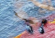 Nhìn cảnh săn bắt cá heo cực kì dã man tại Nhật, những người thích món ăn từ loài cá này sẽ bị ám ảnh suốt đời