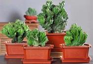 """Trồng 4 loại cây này trong nhà, gia đình có ngay """"máy tạo độ ẩm tự nhiên"""", thanh lọc không khí tiết kiệm được khối tiền điện mỗi năm"""