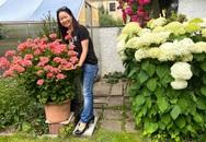 Khu vườn 200m² quanh năm xanh tươi với đủ loại rau quả sạch của mẹ Việt có thâm niên 7 năm làm vườn