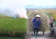Từ 01/01/2021, Hà Nội không còn hoạt động đốt rơm rạ