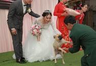 Bật cười vì biểu cảm thảng thốt của chú chó cưng khi bị bắt 'chia ly' với cô chủ trên sân khấu đám cưới