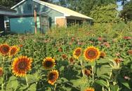 Cô gái trẻ trồng cả vườn rau và hoa theo phương pháp hữu cơ truyền cảm hứng cho nhiều người
