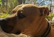 Chó đưa thư mùa Covid-19
