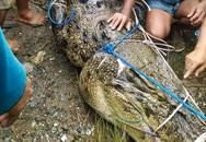 Cá sấu tấn công nhưng không ăn thịt thiếu nữ, khi bắt được người ta mới phát hiện nguyên nhân là do con vật bị rụng hết răng