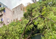 Cây bật gốc, đổ vào nhà dân sau cơn mưa ở TP.HCM