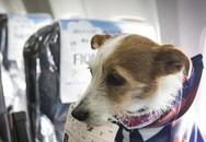 Bỏ trăm triệu thuê máy bay đưa thú cưng về tránh dịch